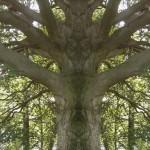 Geister im Baum